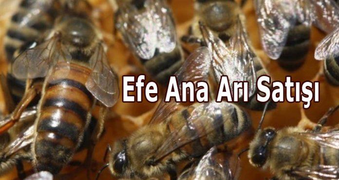 efe ana arı satışı