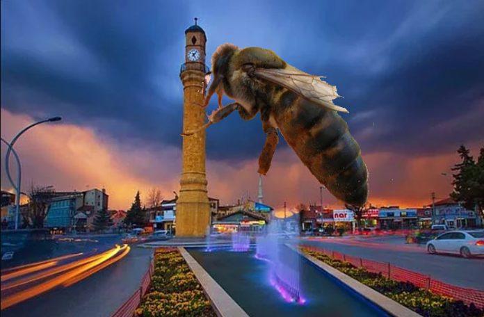 satılık arı çorum
